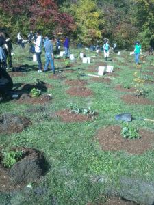 tree-planting-6