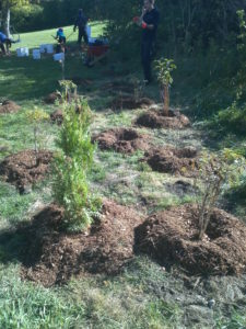 tree-planting-7